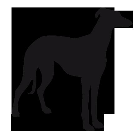 prime maître chien